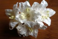 Лилиуми, бели, 5бр., 35 мм
